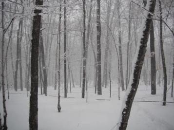 deep snow sap lines Blog v2