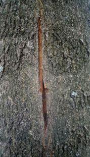 bark split 1 year