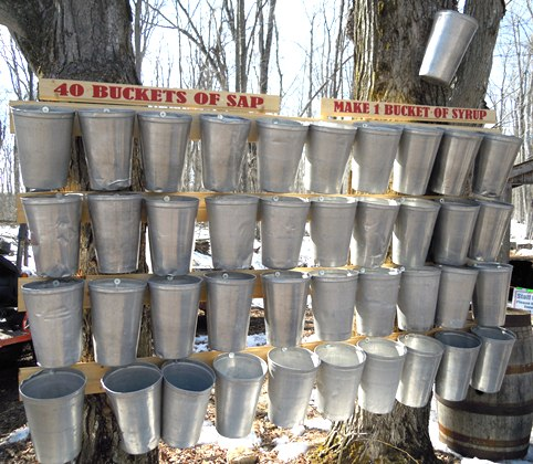 A Display At Maple Syrup Festival Visually Shows Ball Park Estimate Of The Number Pails Fresh Sap That Are Required To Make 1 Pail 40