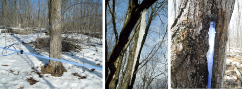 Sugar bush frozen 3 pics