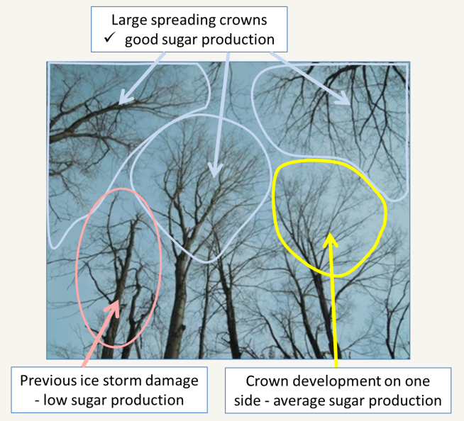 Dormant crowns