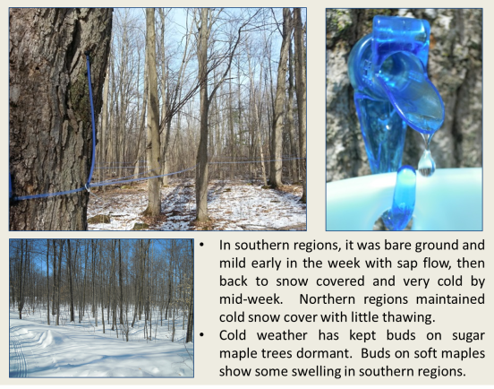Sugar bush bare and snow Feb 28 - Mar 6 2016