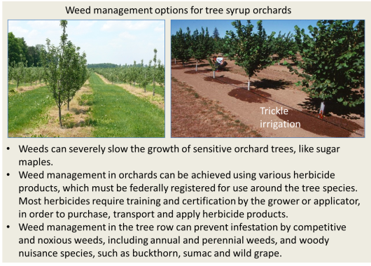 Herbicide in tree rows