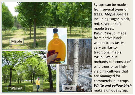 Tree syrup orchards