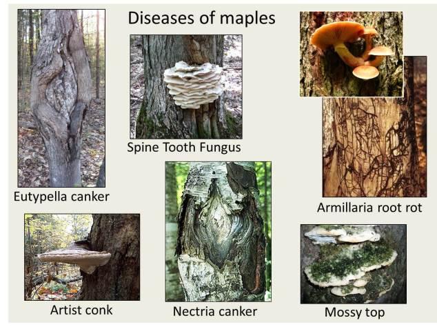 diseases-1