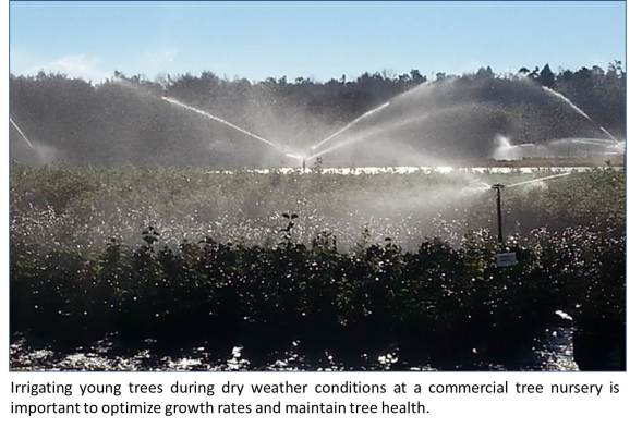 Irrigating trees