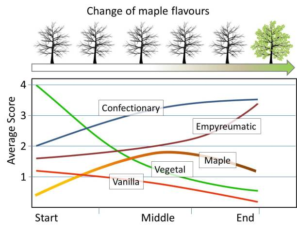 Change of maple flavours