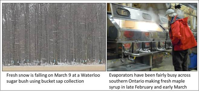 Snow falling evap cooking - March 9