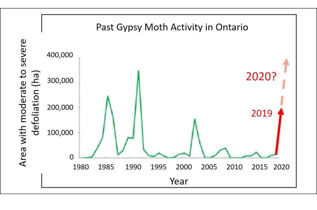 Gypsy moth past activity