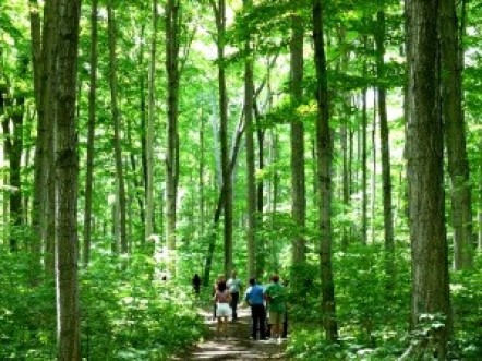 A group of people under a tall canopy of maple trees. It is summertime and the trees and surroundings are all green.